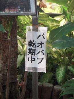 0110baobabu.jpg