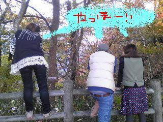 20091109KOUYOU.jpg