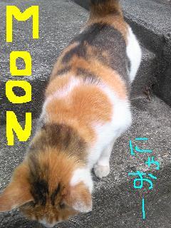 20100623cat.jpg