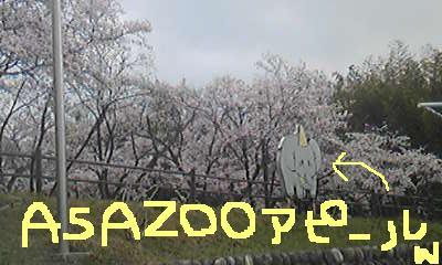 20110411asazoo.jpg