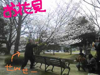 20110411ohanami.jpg