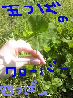20110510gotsuba.jpg