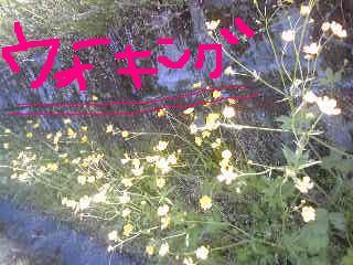 20110510walking.jpg