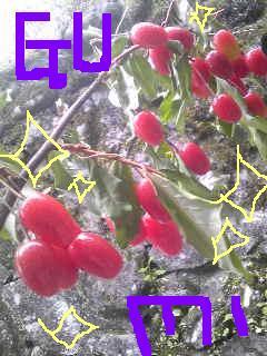 20110614gumi.jpg