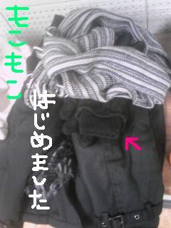 20111206mokomoko.jpg