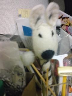 0331shimauma.JPG