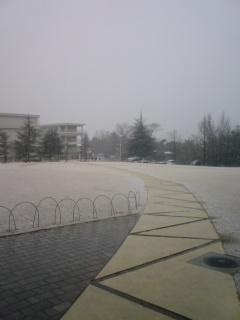 080128_snow.jpg