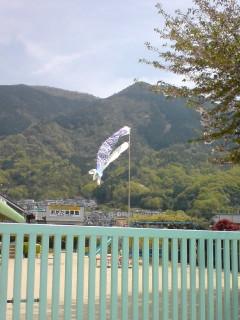 080421_koinoori.jpg