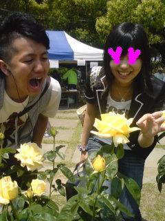 080517_2-rose.jpg