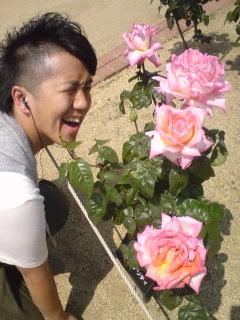 080517_box-rose.jpg