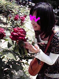 20080517-ha-rose.jpg