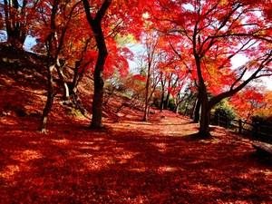 尾関山公園(紅葉).JPG