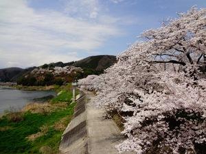 尾関山公園(遠景桜).JPG