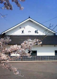 美和桜正面桜.jpg